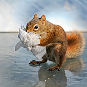 Red squirrel clutching bunch of facial tissues