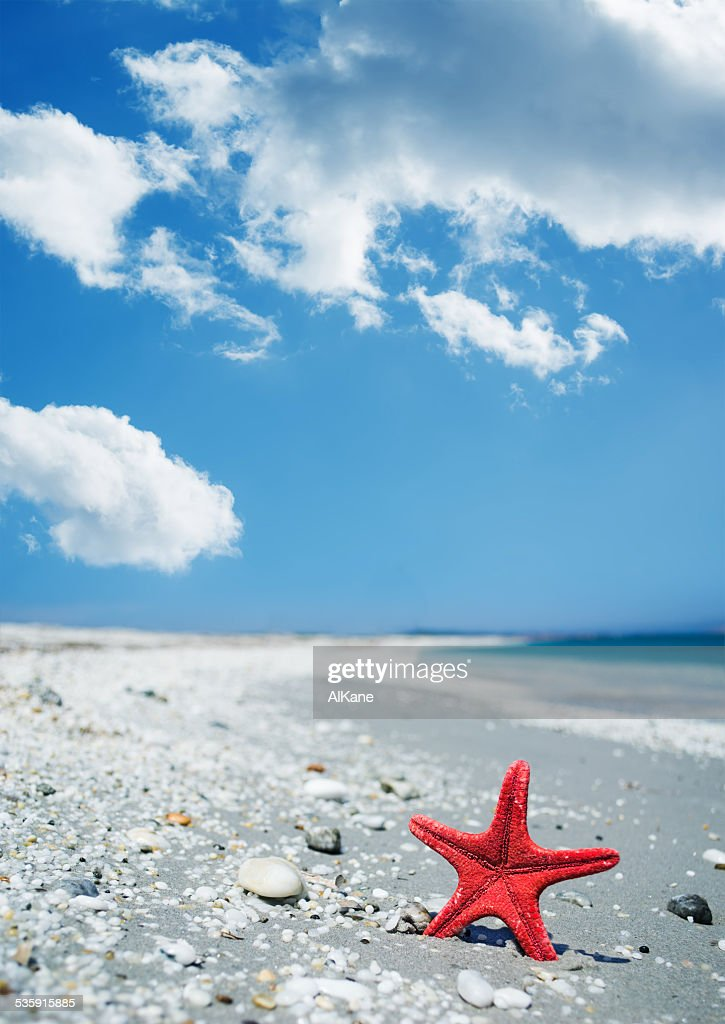 Estrella espinosa roja junto a la costa : Foto de stock