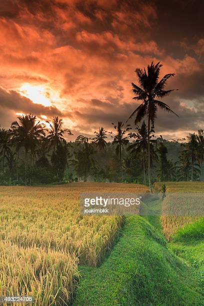Red sunrise in Bali