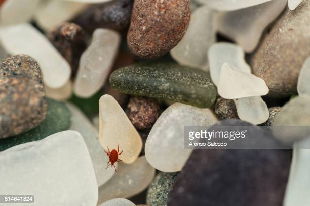 Red Tick over Glass Beach Beads