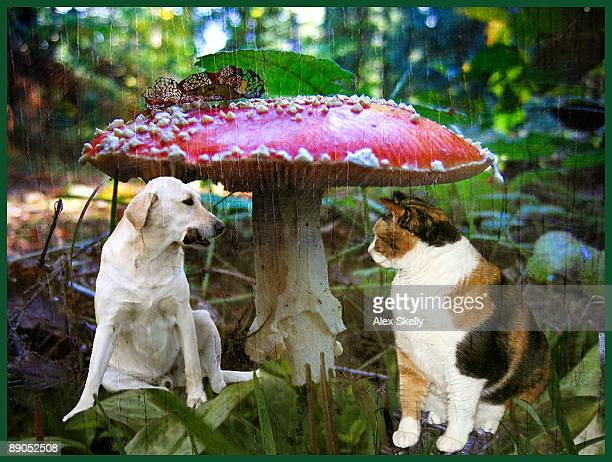 red toadstool umbrella for furry friends