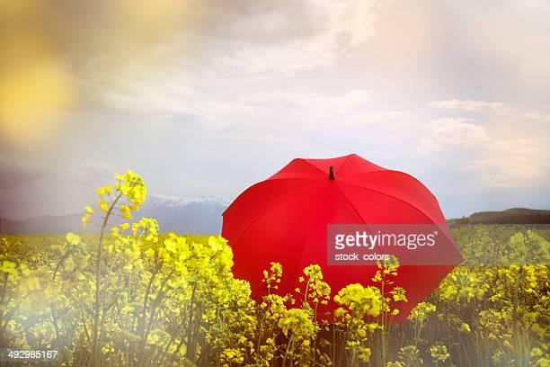 Vergewaltigung-Feld und roten Regenschirm