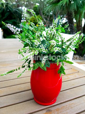 Red Vase Filled With Mint Flowers Stock Photo | Thinkstock