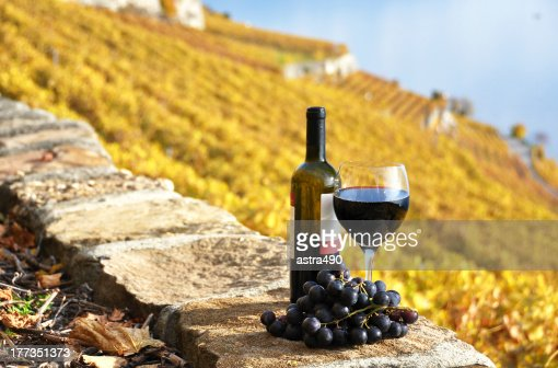 Red wine and grapeson the terrace vineyard : Stock Photo