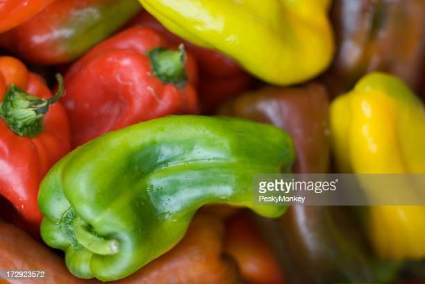 Vermelho amarelo e verde Peppers