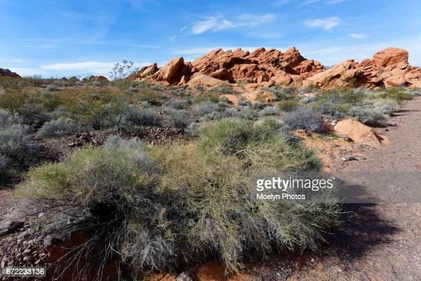 Redstone Dune Trail-Lake Mead Recreation Area