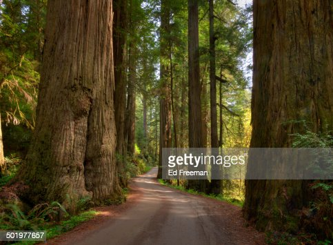 Redwood Forest on a Perfect Spring Day