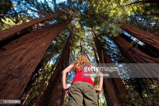 Redwood Hiking