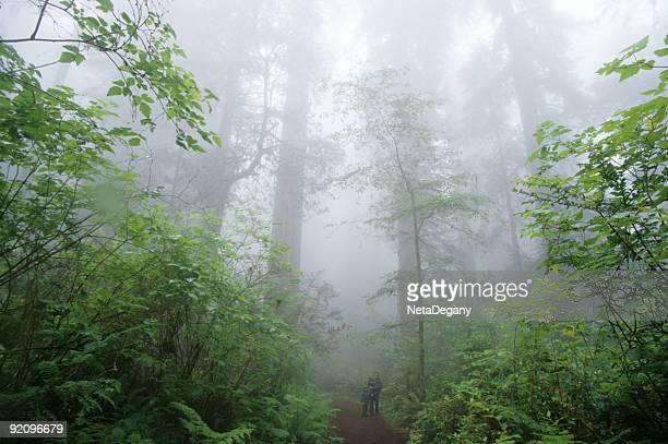 Di Redwood Mist