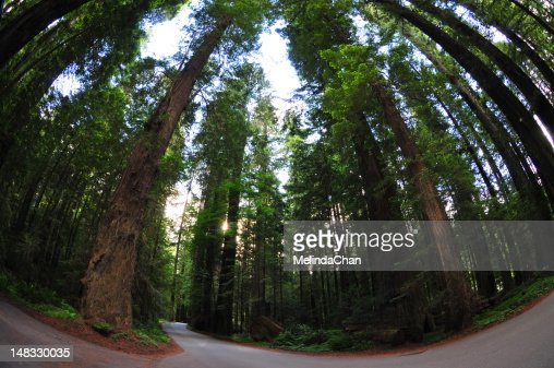 Redwood National Park : Stock Photo