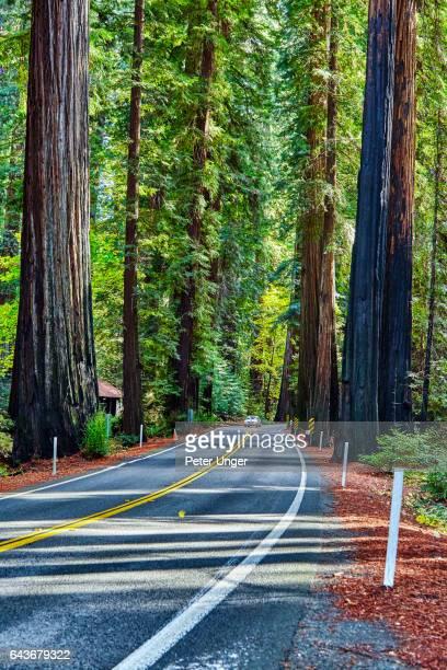 Redwood National Park,California,USA