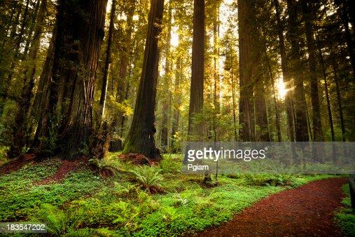 レッドコースからの木の森