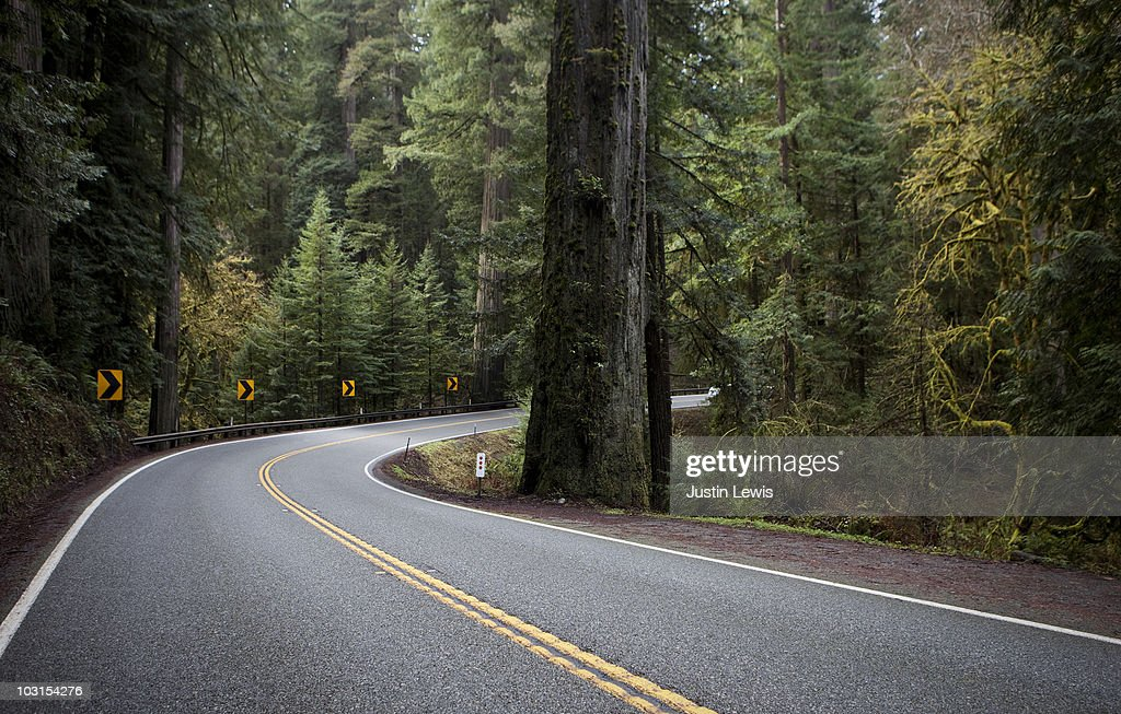 Redwoods on Highway 199 : Stock Photo