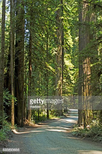 Redwoods : Stockfoto