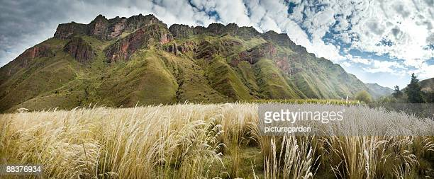 reed grass in front of mountain range