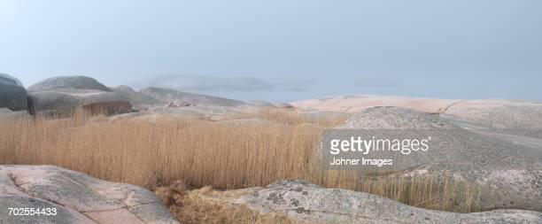 Reeds among rocks