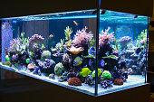 Reef aquarium in livingroom