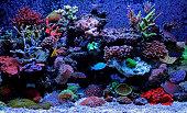 Amazing dream aquarium tank