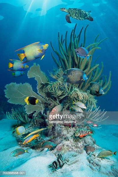 Reef fish and Hawksbill turtle (Digital Composite)