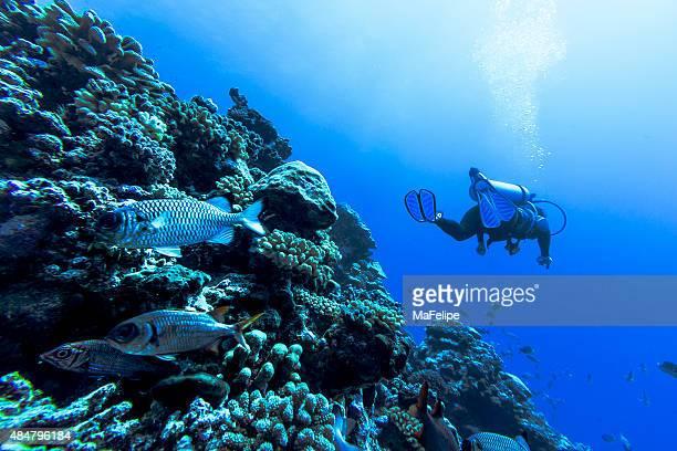 Corales en Tiputa Pass, de Rangiroa, Polinesia Francesa