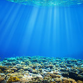 Under water coral reef and tropical fish background