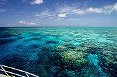 Reef Ride