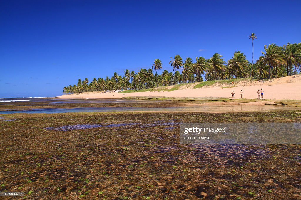 Reefs at Forte beach : Stock Photo