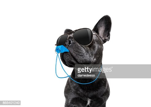 Referee dog with whistle : Stock Photo