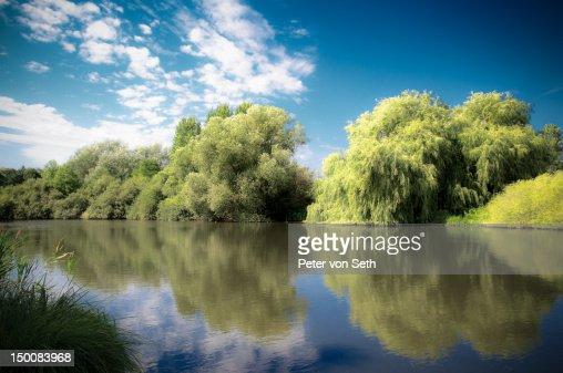Reflecting trees at lake : Stock-Foto