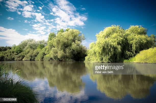 Reflecting trees at lake