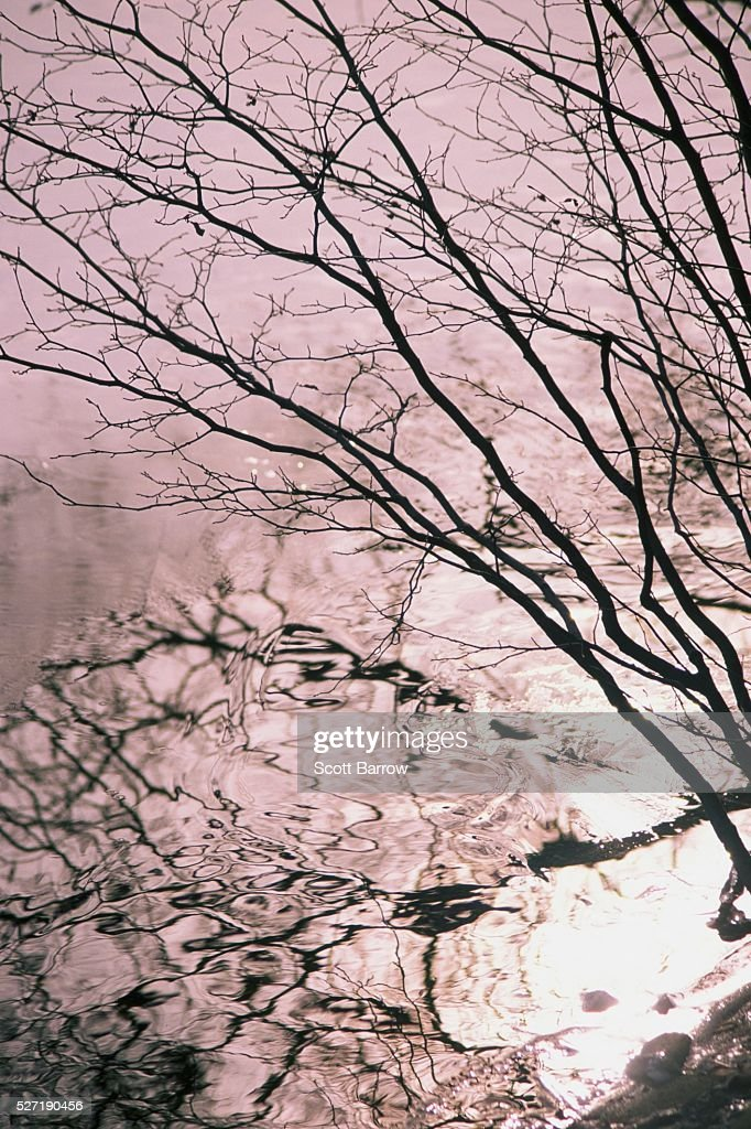 Reflection of a tree in water : Foto de stock