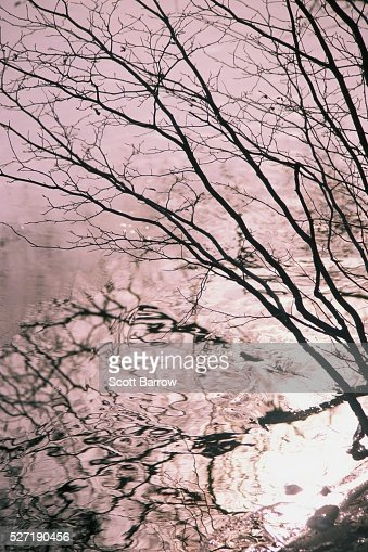 Reflection of a tree in water : Foto stock
