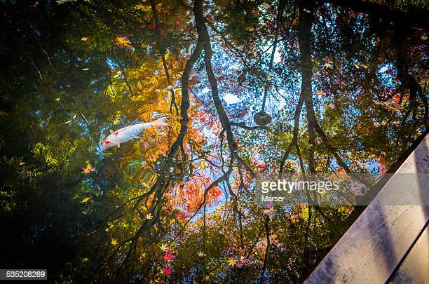 reflection of autumn leaves