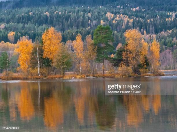 Reflection of autumn trees on lake