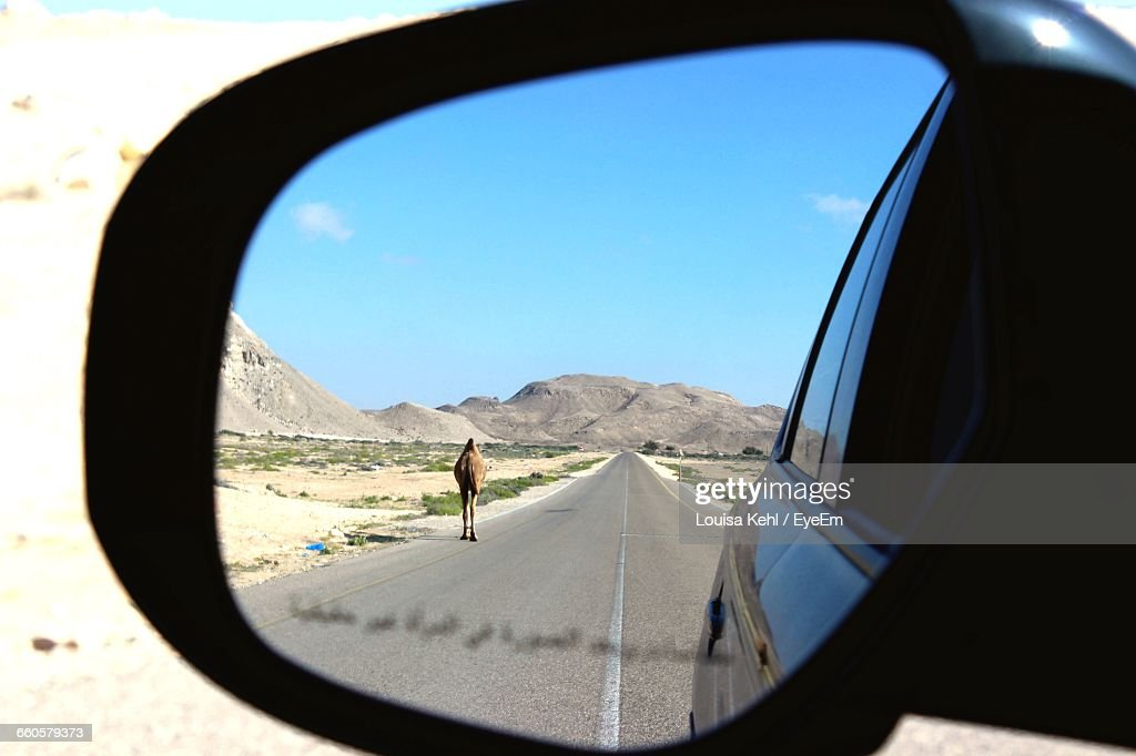 Reflection Of Camel And Road On Car Side-View Mirror