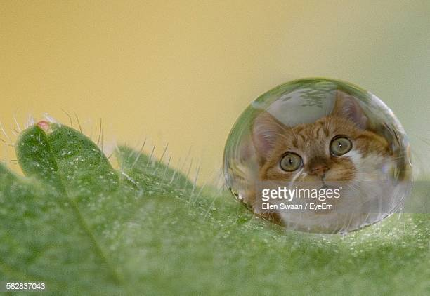 Reflection Of Cat On Water Drop At Leaf