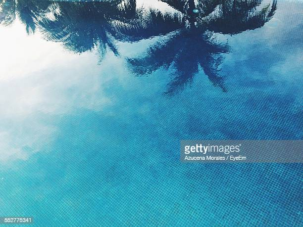 Reflection Of Coconut Palm Tree Against Blue Sky On Swimming Pool