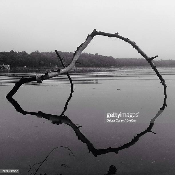 Reflection Of Driftwood On Lake