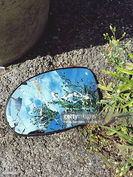 Reflection of Grass On Broken Side-View Mirror