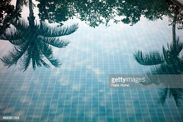 reflection of palm trees in a swimming pool