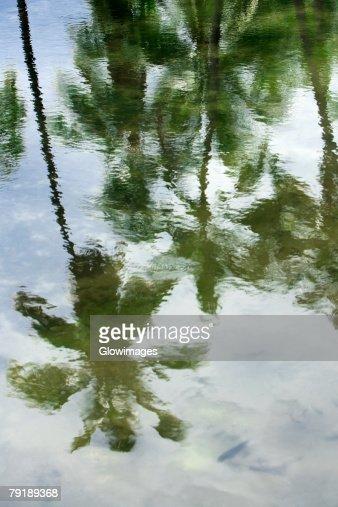 Reflection of palm trees in water, Puuhonua O Honaunau National Historical Park, Kona Coast, Big Island, Hawaii Islands, USA : Foto de stock