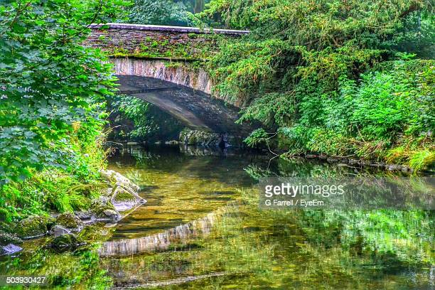 Reflection of plants and bridge in calm water