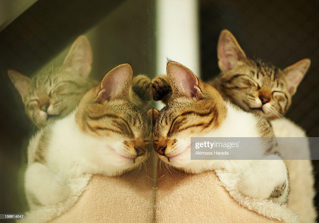 reflection of sleeping kittens. : Stock Photo