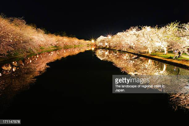 Reflection of the cherry blossoms