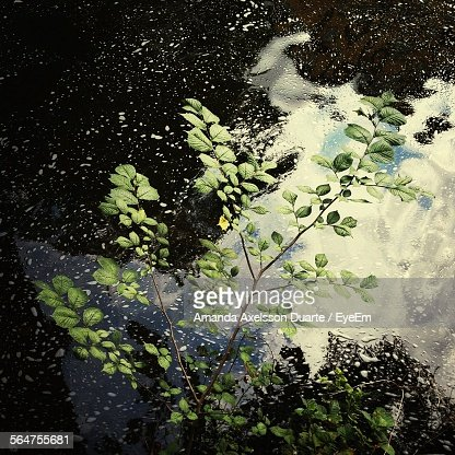 Reflection Of Tree Branch In Puddle