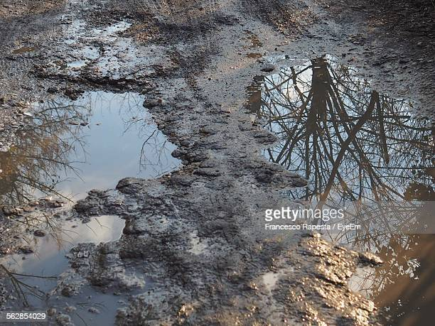 Reflection Of Tree Branches And Clouds On Water