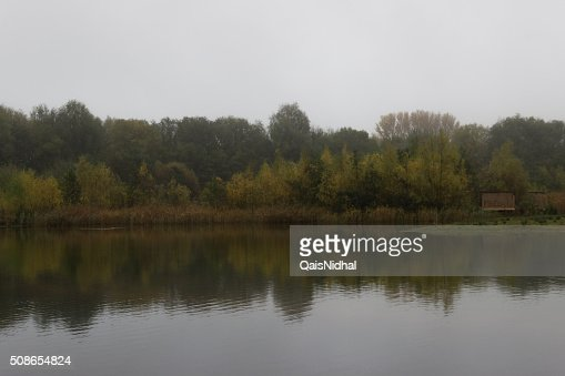 reflection of tree's from water : Stock Photo
