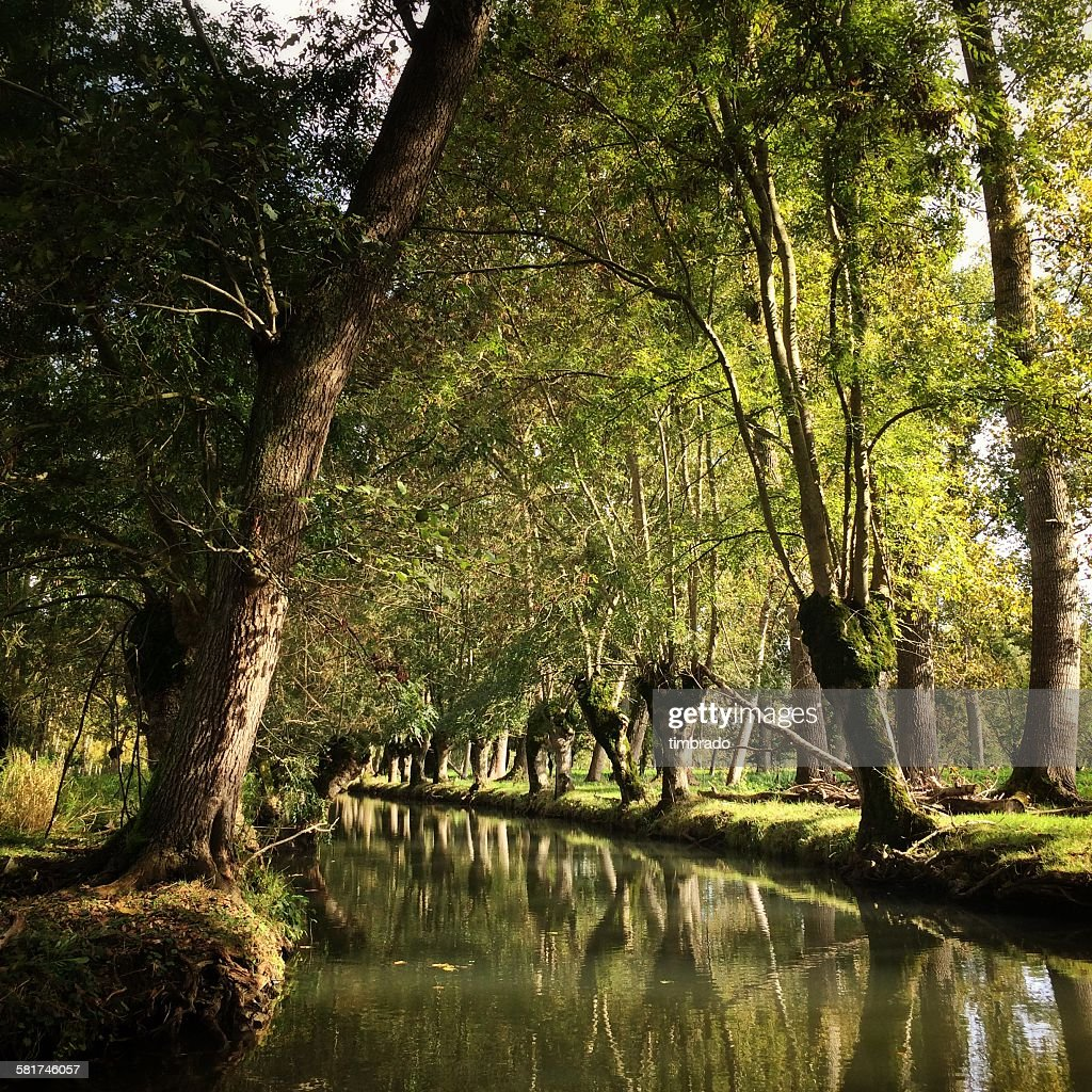 Reflection of trees in a canal, Marais Poitevin, France