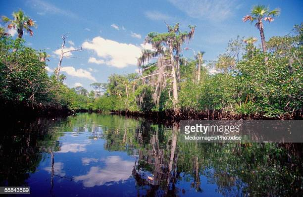 Reflection of trees in a river, Loxahatchee River, Jonathan Dickinson Park, Jupiter, Florida, USA