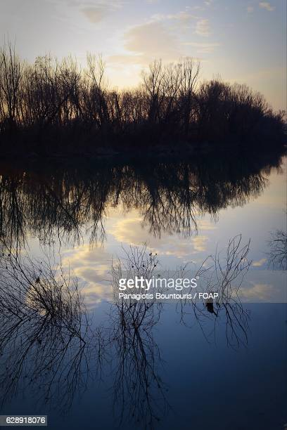 Reflection of trees in brenta river